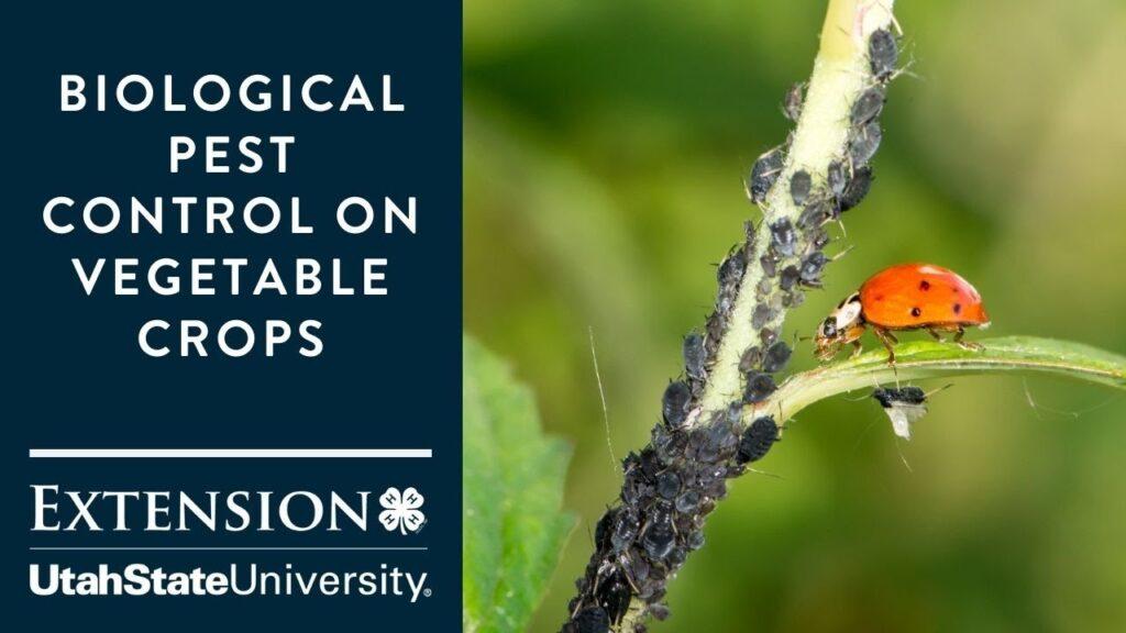 Biological Pest Control on Vegetable Crops