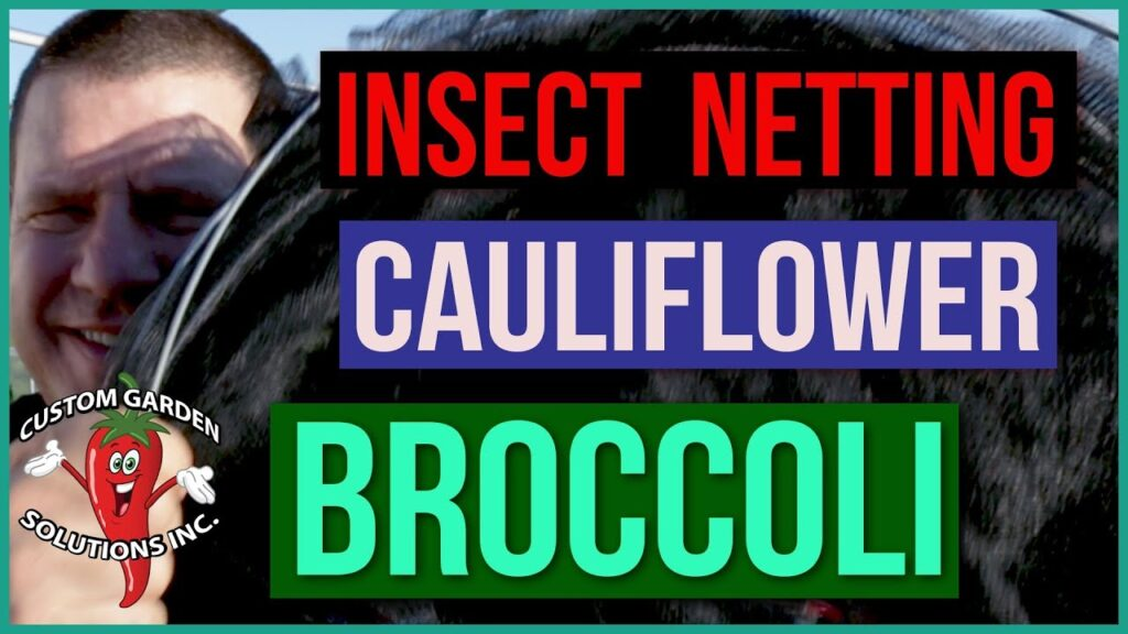 Broccoli And Cauliflower Insect Netting and Shade Cloth – Cabbage Worms and Heat