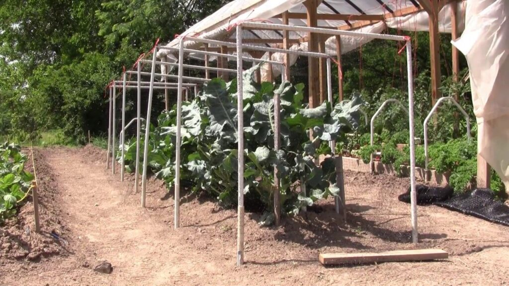 Controlling insect damage in a Mittleider garden using mosquito netting