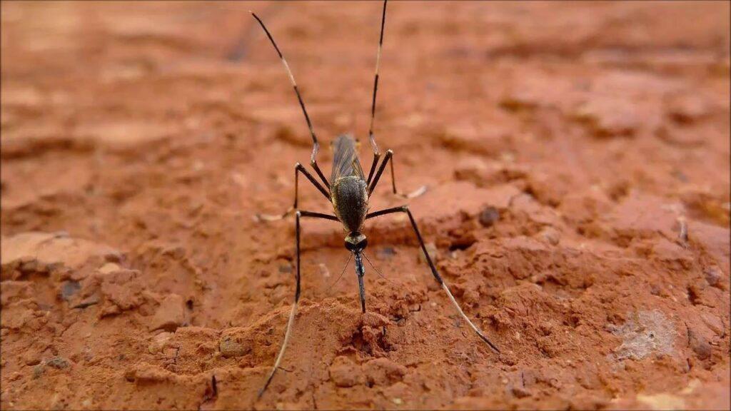 El mejor repelente de mosquitos sonido (15 kHz) y vídeo