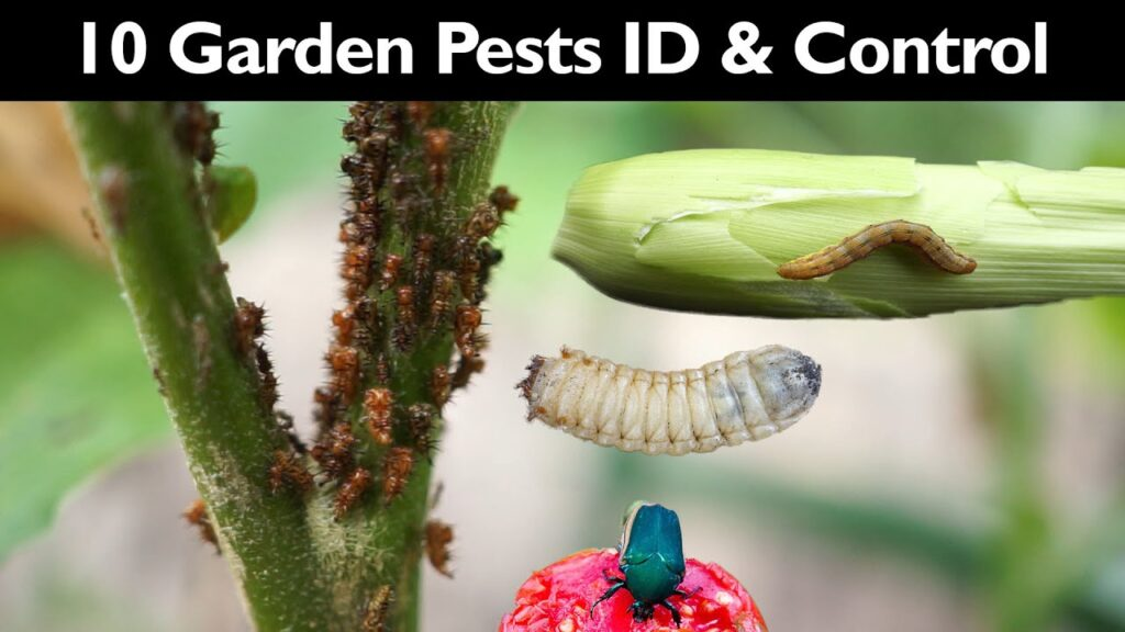 Garden Insect Control – How To Control Garden Pests Without Insecticide / Pesticide – Gardening Tips