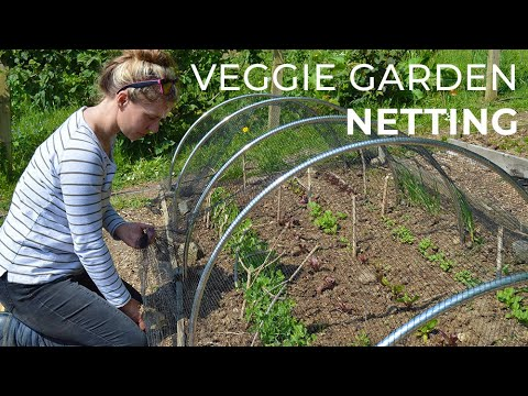 Garden Netting: Protecting crops in the Veggie Garden