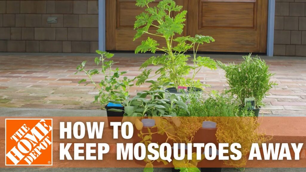 How to Get Rid of Mosquitoes Using Mosquito Control Tips | The Home Depot