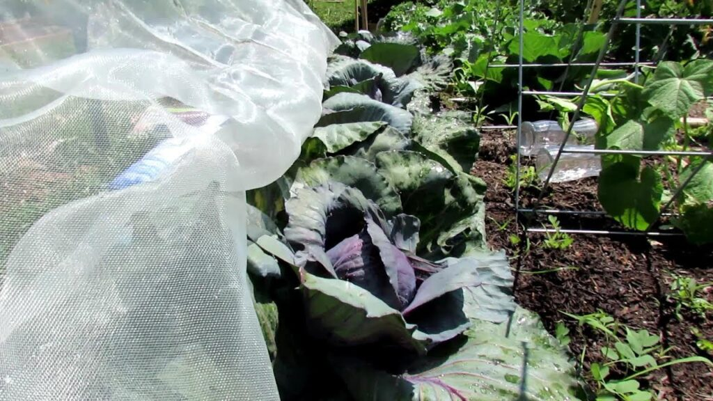 How to Use & Build a Garden Mesh Insect Barrier: No Chemicals Ever & Custom Design Your Barrier