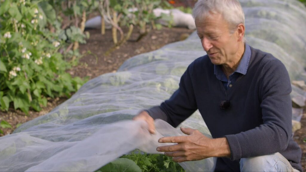 Mesh covers to protect vegetables , showing how and when to use them
