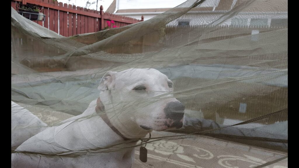 Military Issued Mosquito Netting Barrier Review