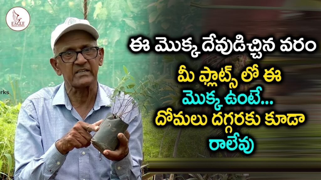 Mosquito Repellent Plants | Plant Science | DR SV Rama Rao |Eagle Media Works