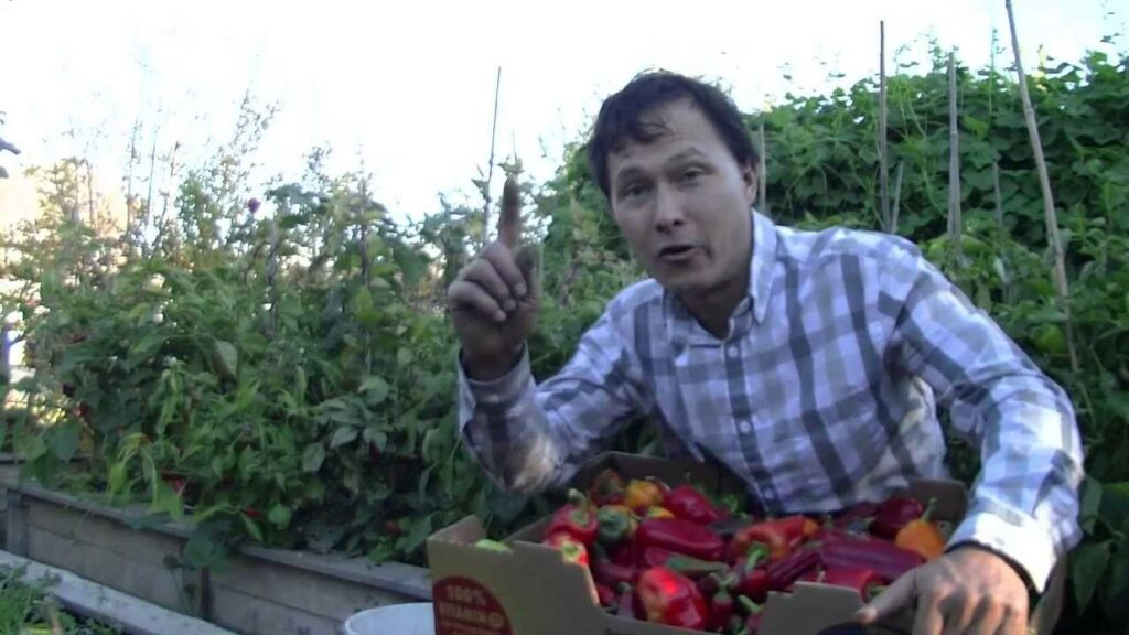 Organic Pest Control – End Problems with Bugs Forever in Your Garden