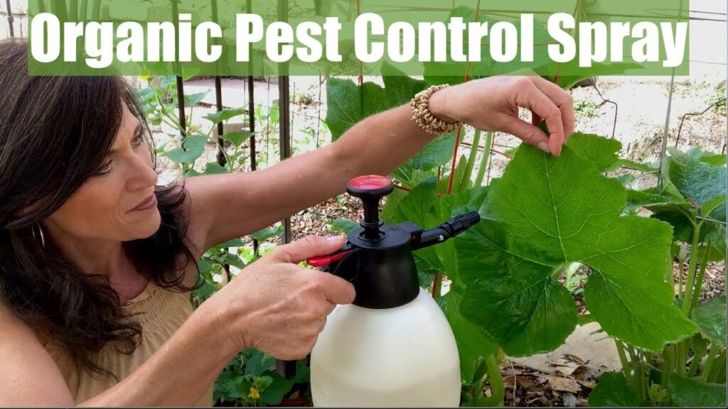 Organic Pest Control Spray for Your Vegetable Garden for Aphids & Chewing Insects