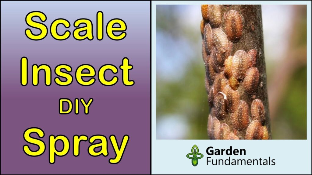 Scale Insect Control 🌺🌻🌹DIY Spray for Houseplants and Garden